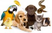 Как открыть ветеринарный кабинет?