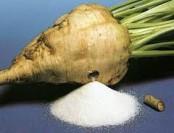 Бизнес на производстве сахара из сахарной свеклы