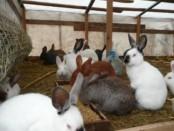 Выгодно или нет разведение кроликов как бизнес