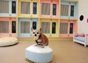 Как открыть гостиницу для животных?